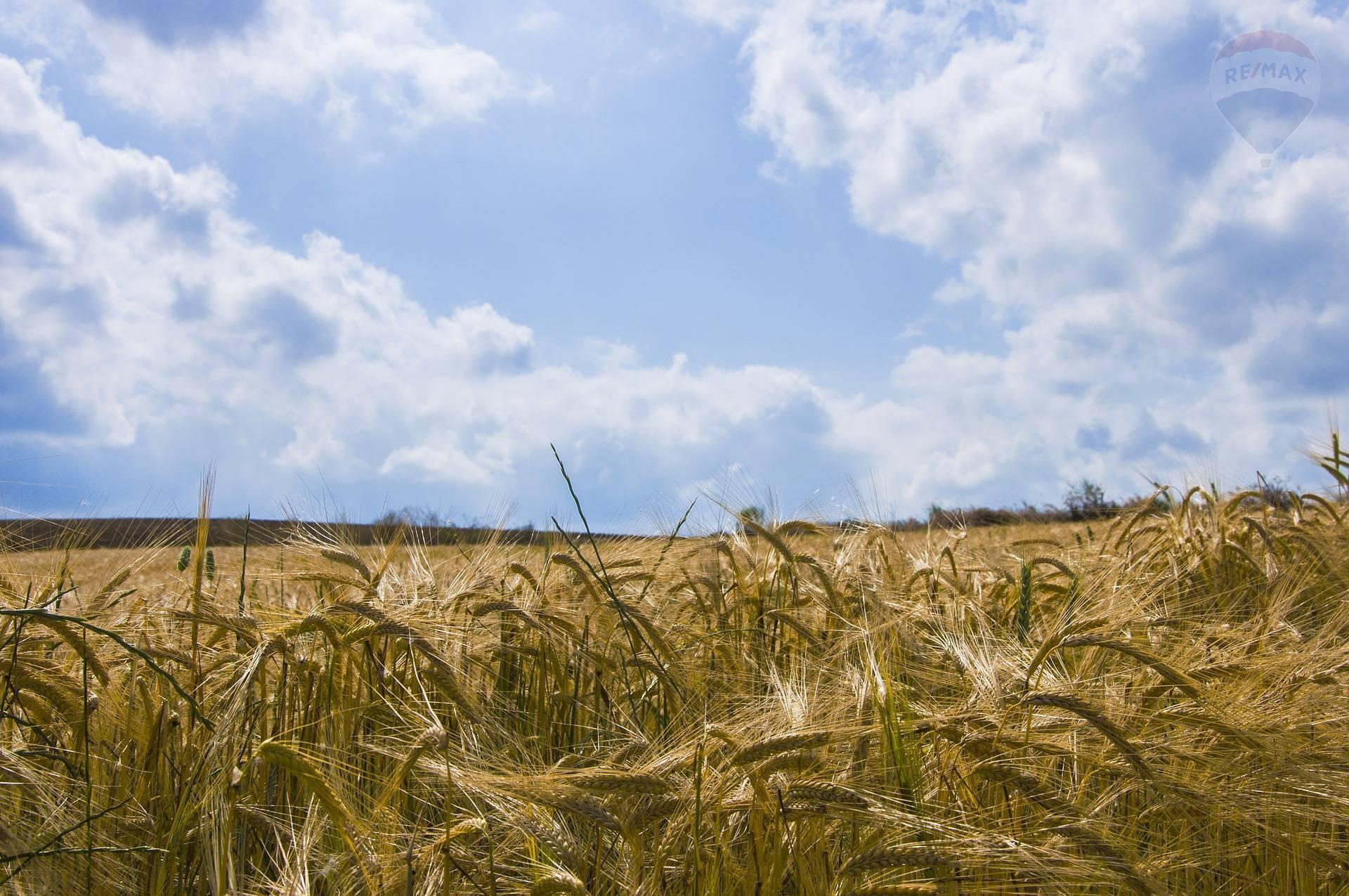 predaj poľnohospodársky pozemok Paňa